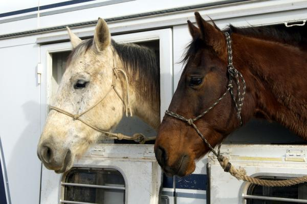 Signs of Trouble When Transporting Horses
