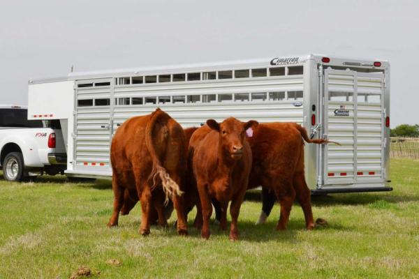 How To Hook Up a Gooseneck Horse Trailer