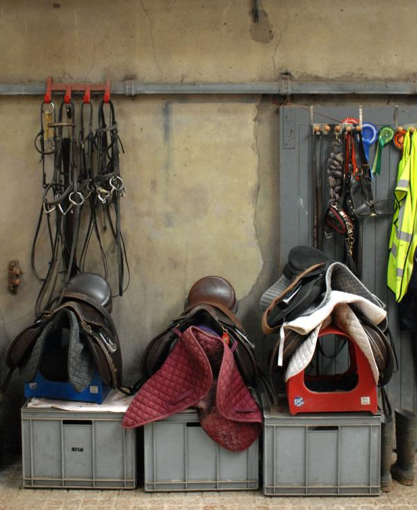 A Glossary For Horse Tack