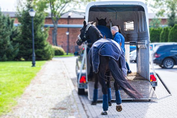 How to Load a Horse in a Trailer