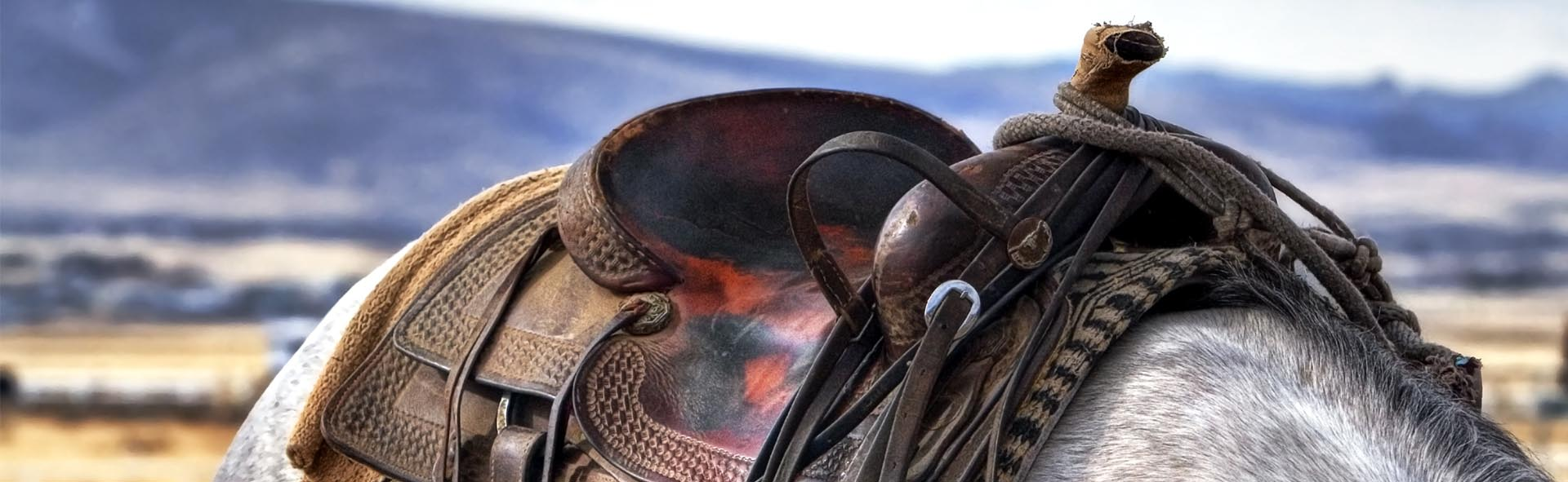a-glossary-for-horse-tack