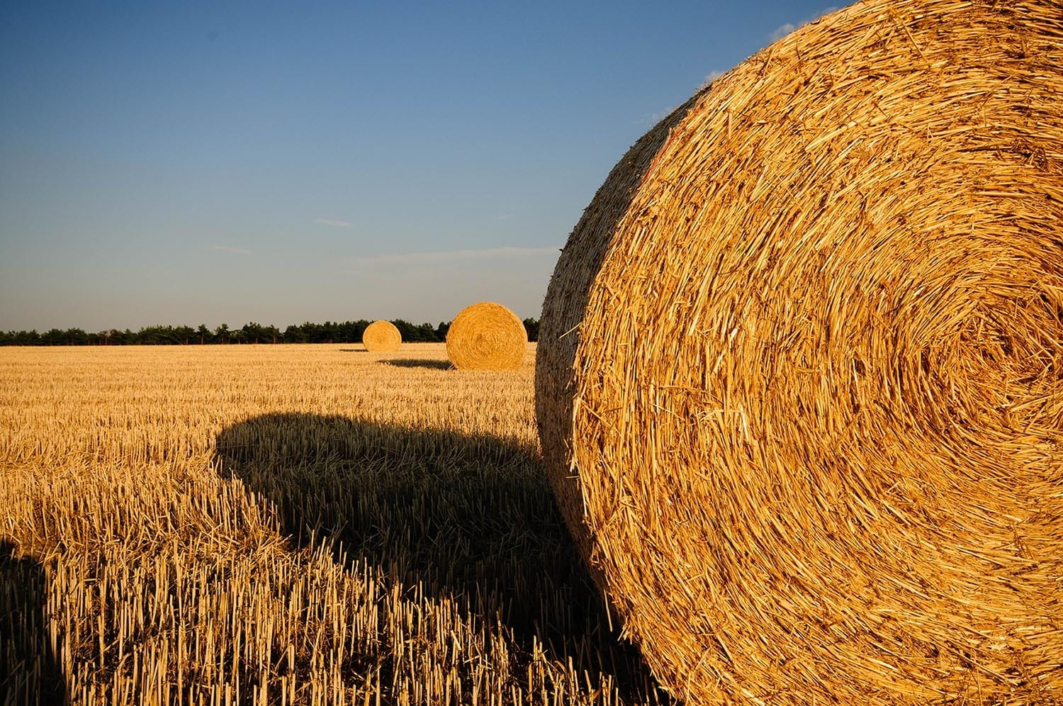 hay-bales-for-texas-relief
