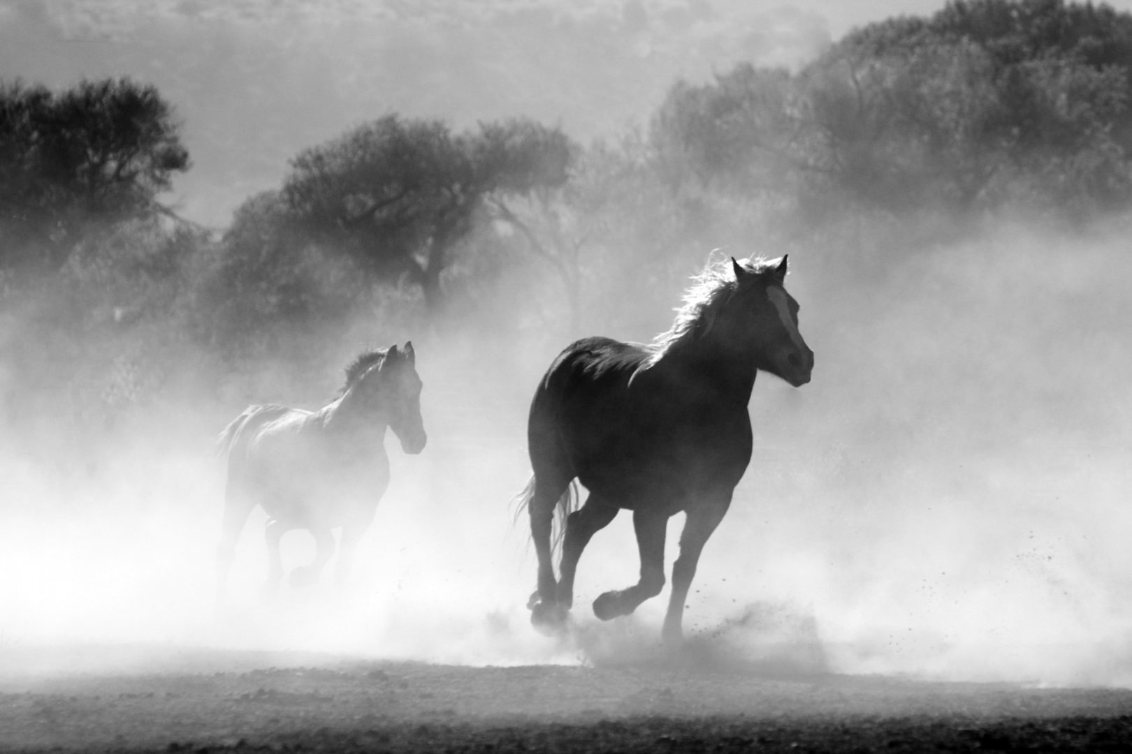horses-on-prairie-black-white-stock